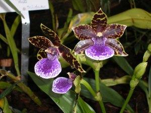 orchids_blog2