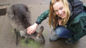 A_Kangaroo