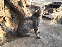 Krasse Katze