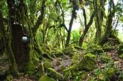3-Pothana-Pitam Deurali-Kokar Forest Camp