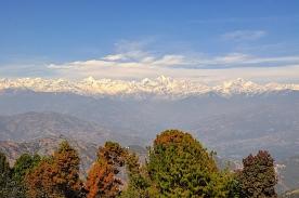 Himalaya Rhododendron