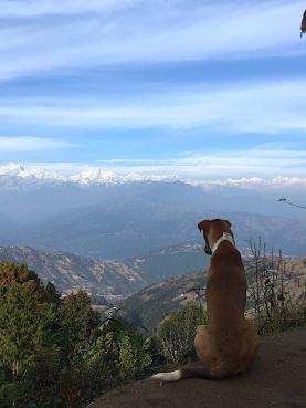 Himalaya_dog